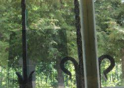 Пленка экранирующая на окна